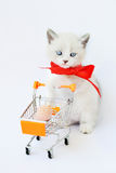 Funny kitten pampered. Kitten on a cart driven by sausage Stock Photography