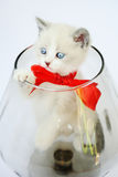 Funny kitten pampered. Kitten with a red bow in a glass vase Stock Image