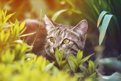 Funny  kitten peeking out of green grass. Funny tabby kitten peeking out of green grass Stock Photo