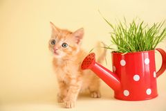Funny kitten with plant in watering can on color background royalty free stock photography