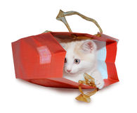 Funny kitten in red pack. Isolated on the white Royalty Free Stock Image