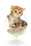 Funny kitten sitting in a big glass Stock Images