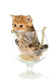 Funny kitten sitting in a big glass Royalty Free Stock Image