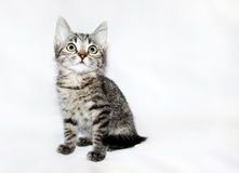 Funny Kitten striped looking up,  Stock Photography