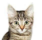 funny kitten striped  Royalty Free Stock Photos
