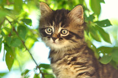 Funny kitten on a tree Royalty Free Stock Photos