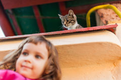 Funny kitten watching from above. Funny kitten watching a child from above Royalty Free Stock Photos