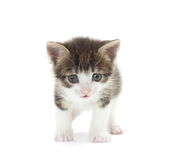 Funny kitten Royalty Free Stock Images