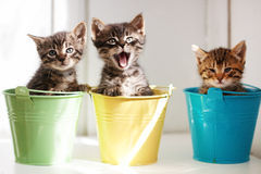 Funny kittens. Three funny kittens sitting inside colorful pots stock images