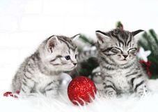 Funny kittens. Curious kitten. Christmas Royalty Free Stock Photos