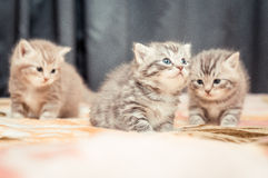 Funny kittens Stock Photography