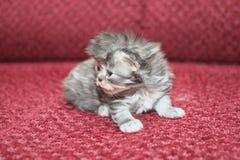 Funny kitty Stock Image