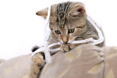 Funny kitty. Photo of young grey cat Stock Photography