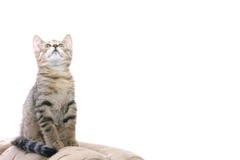 Funny kitty Royalty Free Stock Image