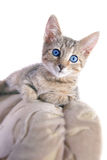 Funny kitty Royalty Free Stock Photo