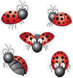 Funny ladybird. In different positions Stock Image
