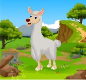 Funny lama cartoon in the jungle with landscape background Stock Photos
