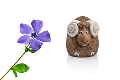 Funny lamb. Looking at violet spring flower Royalty Free Stock Images