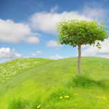 Funny landscape. With beautiful tree Stock Images