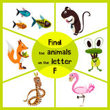 Funny learning maze game, find all 3 cute wild animals with the letter f, pink flamingos, marsh frog and forest Fox . Educational Stock Photography