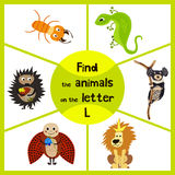 Funny learning maze game, find all 3 cute wild animals with the letter L, desert lizard, the lion of the Savannah and the insect l Stock Image