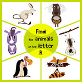 Funny learning maze game, find all 3 cute wild animals with the letter P, forest raccoon, Rhino from Savannah and domestic sheep. Educational page for children Stock Photos