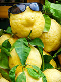 Funny lemon in sunglasses Royalty Free Stock Photography