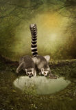 Funny lemurs. Drinkers water from small pond in a forest Stock Photo