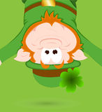 Funny Leprechaun Green Background Royalty Free Stock Photos