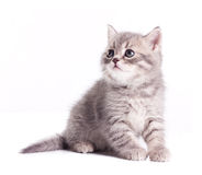 Funny likktle kitten Stock Photos