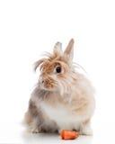 Funny rabbit Royalty Free Stock Photography