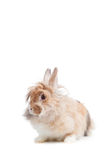 Funny rabbit Stock Images