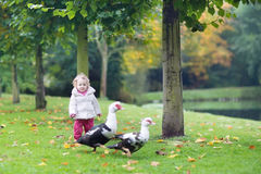 Funny little baby girl with wild ducks in autumn park Stock Photos