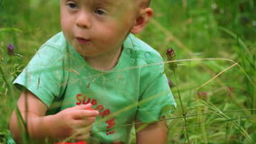 Funny little boy eating strawberries in the woods. Funny little boy finds and eats strawberries in the woods stock video
