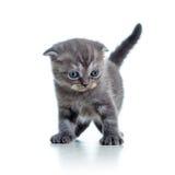 Funny little cat kitten  on white Stock Images