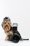 Funny little dog with digital camera stock images