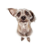 Funny Little Dog Looking Up Stock Image
