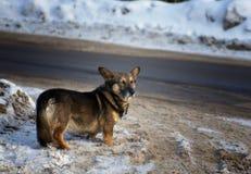 Funny little dog ona winter road Royalty Free Stock Photo