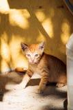 Funny little ginger kitten of Thassos Royalty Free Stock Image