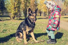 Funny little girl playing with a dog Royalty Free Stock Photo