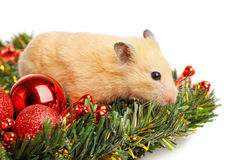 Funny little hamster Stock Photos