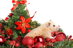 Funny little hamster Stock Images