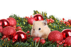 Funny little hamster Stock Image