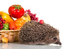 Funny little hedgehog and basket of vegetables and fruits isolated on white royalty free stock photography