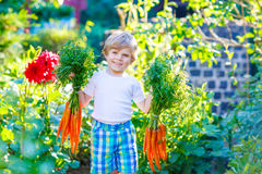 Funny little kid boy with carrots in  garden Stock Photos