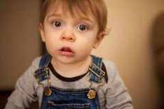 Funny little kid drooling a bit Royalty Free Stock Photography