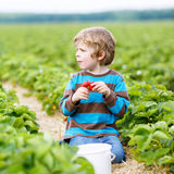 Funny little kid picking and eating strawberries on berry farm Stock Photo