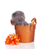 Funny little kitten in a basket Royalty Free Stock Photos