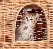 Funny little kitten inside wicker cat house royalty free stock photography