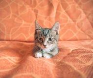 Funny little kitten Stock Photo